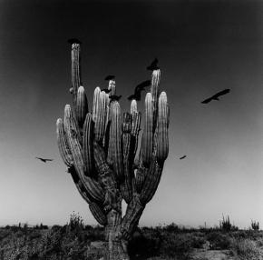Desierto de Sonora by Graciela Iturbide